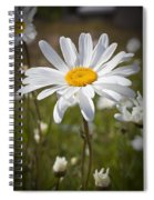 Daisy 1 Spiral Notebook