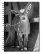 Daisy, Black And White Spiral Notebook