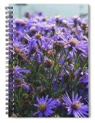 Daisy Dewdrops Spiral Notebook