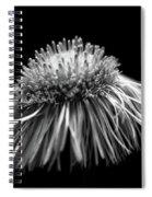 Daisy Flea Bane 0619c Spiral Notebook