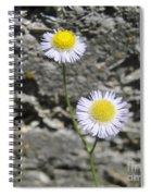 Daisy Fleabane Flowers Spiral Notebook