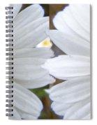Daisy  Magic Spiral Notebook