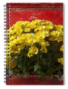 Daisy Plant In Drawers Spiral Notebook