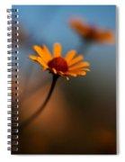 Daisy Standout Spiral Notebook