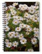 Daisy Wave Spiral Notebook