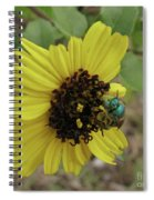 Daisy With Blue Bee Spiral Notebook
