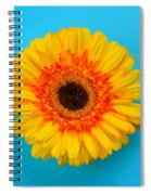Daisy - Yellow - Orange On Light Blue Spiral Notebook