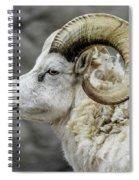 Dall Sheep Spiral Notebook