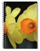 Dallas Daffodils 07 Spiral Notebook