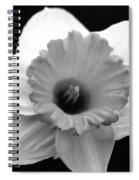 Dallas Daffodils 17 Spiral Notebook