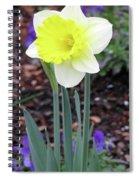 Dallas Daffodils 20 Spiral Notebook