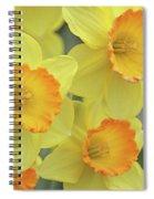 Dallas Daffodils 24 Spiral Notebook