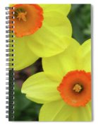 Dallas Daffodils 36 Spiral Notebook