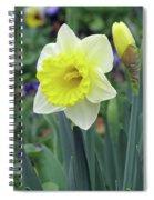 Dallas Daffodils 64 Spiral Notebook
