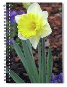 Dallas Daffodils 71 Spiral Notebook