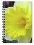 Dallas Daffodils 72 Spiral Notebook
