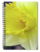 Dallas Daffodils 80 Spiral Notebook