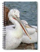 Dalmatian Pelican #3 Spiral Notebook