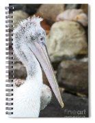 Dalmatian Pelican Spiral Notebook