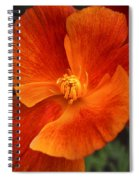 Dances Of Light Spiral Notebook