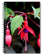 Dancing Fuchsia Spiral Notebook