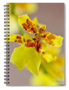 Dancing Lady Orchid Spiral Notebook