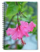 Dancing Lady Pink Hibiscus Spiral Notebook