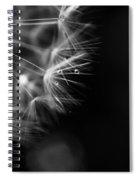 Dandelion 2 Bw Spiral Notebook