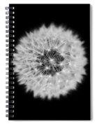 Dandelion 3 V2 Spiral Notebook