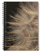 Dandelion Eighty Spiral Notebook