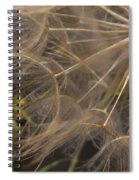 Dandelion Eighty Three Spiral Notebook