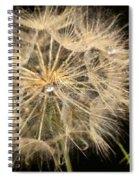 Dandelion Fifty Nine Spiral Notebook