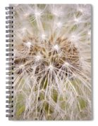 Dandelion Fireworks Spiral Notebook