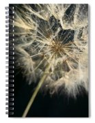 Dandelion Forty One Spiral Notebook
