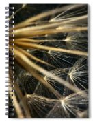 Dandelion Forty Three Spiral Notebook