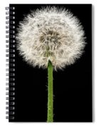 Dandelion Gone To Seed Spiral Notebook