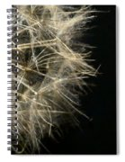 Dandelion Nineteen Spiral Notebook