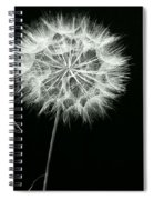 Dandelion Thirty Six Spiral Notebook