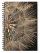Dandelion Twenty Two Spiral Notebook