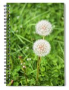 Dandelions In Connecticut Spiral Notebook