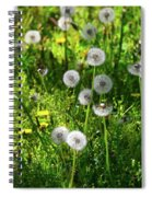 Dandelions On The Maryland Appalachian Trail Spiral Notebook