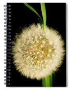 Dandelion's Seed Head. Spiral Notebook