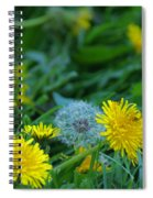 Dandelions, Young And Old Spiral Notebook