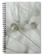 Dandy Drops 2 Spiral Notebook
