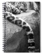 Dangling And Dozing In Black And White Spiral Notebook