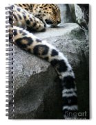 Dangling And Dozing Spiral Notebook