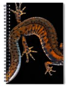 Danube Crested Newt Spiral Notebook