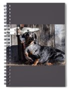 Dapple Dachshund Spiral Notebook