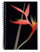 Daring Heliconia Acuminata Spiral Notebook