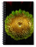 Dark Beauty Spiral Notebook